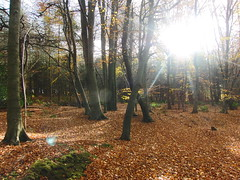 Delamere Forest, Cheshire (Alex Staniforth: Wildlife/Nature Photography) Tags: autumn alex leaves forest cheshire wildlife group sunny casio delamere staniforth exfh20