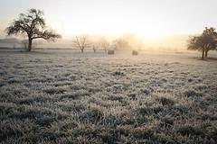 CD7I7949 (andrey.salikov) Tags: ice rain germany hoarfrost lumire freezing rime trier drizzle hoar superbe  drizzling        canoneos1dmarkiv  icemosaic rhinelandpalatinatestate