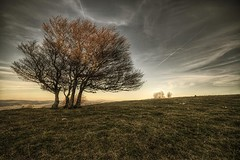 (Philippe Saire || Photography) Tags: sky tree nature field clouds canon landscape eos switzerland suisse swiss champs meadow sigma wideangle ciel 7d prairie 1020mm nuages paysage campagne arbre hdr photomatix creuxduvan philippesaire