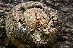 Tree node (Deb Jones1) Tags: macro green nature beauty canon garden outdoors 1 jones flora explore deb flickrduel