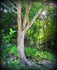 ~~WaimeaBotanicalGarden#6~~ (TravelsThruTheUniverse) Tags: tropicalplants zengardens oahuhawaii tropicalgardens tropicalfoliage waimeavalleybotanicalgarden tropicallandscapes waimeavalleyoahu waimeaparkhaleiwaoahu