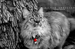 M̳̊̑y Cat❤.. (Aishah Abdullah) Tags: black cat nikon لوني عزل