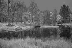 DSIR0849fir2r (RL100) Tags: lakedistrict infrared fauxinfrared skelwith fujiispro slewtarn