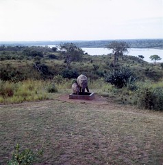 Elephant and calf at Paraa Lodge, Murchison Falls National Park. In the background is the Victoria Nile.