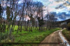 Le petit bois (Vision d'Esprit) Tags: nature automne hiver paysage campagne hdr ardeche ardche rhonealpes wow1 wow2 wow3 wow4