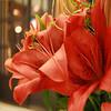 Feliz Natal ! Merry Christmas ! ¡Feliz Navidad! Joyeux Noël! メリークリスマス!Buon Natale! Wesołych Świąt! (Martha MGR) Tags: christmas flowers flower nature natal square natureza lilies oranje flôres mmgr canoneosdigitalrebelxs marthamgr marthamgraymundo