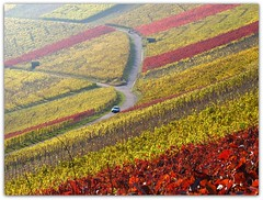 Vineyard Rotenberg (Habub3) Tags: auto park street travel autumn red panorama holiday rot fall leave texture nature colors car yellow canon germany garden landscape deutschland vineyard flora europa europe stuttgart path urlaub laub herbst natur vine gelb blatt landschaft garten bunt vacanze weg reise wein farben weinberg g12 rotenberg 2011 strase habub3 mygearandme