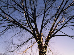 a lighted tree by Belvedere Square (Zombie37) Tags: sky white holiday black blur tree luz colors lines silhouette yellow night composition contrast dark gold lights blurry glow quiet purple graphic fuzzy dusk bare branches violet baltimore christmaslights lookup lit fullframe dots simple silhouetted radiating afterdark gloaming lighted violethour belvederesquare sooc outoffous