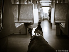 Boston Terrier in a train