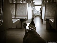 Boston Terrier in a train