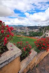 Dalat - Vietnam (Abdulaziz Al-furaydi) Tags: flowers flower stairs canon landscape town stair downtown d down vietnam land 1020mm scape dalat 1020  550     550d canon550        canon550d 550 550 550
