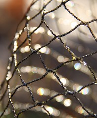 Pond net (secondhobby) Tags: abstract art canon fence lights bokeh plastic raindrops netting flickraward
