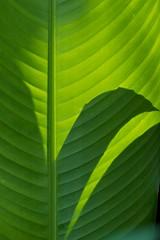 Shadow play (Deb Jones1) Tags: green nature beauty leaves canon garden outdoors 1 jones leaf flora explore deb greenleaf flickrduel