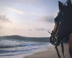 ... ( ozaros) Tags: sunset sky horse beach clouds waves