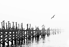 FoggyBiloxiMorn (Seaside Artistry) Tags: ocean morning seagulls white pelicans fog docks mississippi pier seaside nikon gulls flight foggy rob biloxi seashore wavy whiteout seabirds gulfport d300 woodpier robvazquez