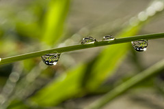 Mysunstars (apogee_1934) Tags: macro water photography drops nikon tamron 90mm f28 sunstars d700
