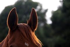 sanjosex:animal salvatge