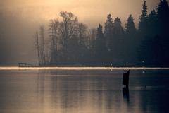 Lake 8of12 (sparth) Tags: seattle trees lake reflection fog landscape is washington december foggy lac series usm washingtonstate brouillard marymoor lakesammamish 2011 marymoorpark 20x f28l ef300mm 5dmkii ef300mmf28lisusm20x