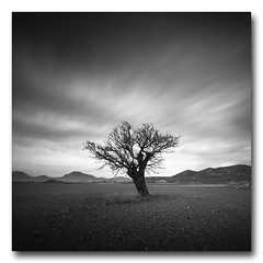 (jose.singla) Tags: longexposure sky bw españa white black tree byn blanco monochrome canon landscape monocromo luces spain negro sigma paisaje murcia cielo árbol 1020 sombras largaexposición 50d joseantoniogimenez
