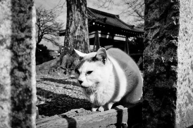 Today's Cat@2012-01-17