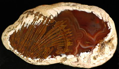 Falcon spray - 01142012 (dardilrocks) Tags: travel texas agates fortification specimen polished collecting combination falconlake sagenite zapatacounty