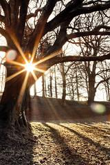 Winter Sun (Stacy Johnson 1) Tags: winter light shadow england sun snow tree grass frost lakedistrict barren lakewindermere windermere sunstar