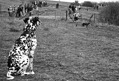 Aupa,campen !! (srmiguelo) Tags: perros naturalezaanimales