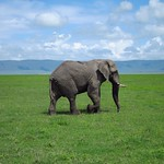 "Elephant <a style=""margin-left:10px; font-size:0.8em;"" href=""http://www.flickr.com/photos/14315427@N00/6741669445/"" target=""_blank"">@flickr</a>"