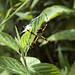 Un piccolo ragno verso Aguas Calientes (2)