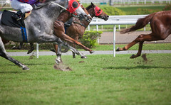 iStockhorse_000018591488Small.jpg (TCLMsLoo) Tags: people horse male rivalry grass animal sport horizontal closeup speed mammal outdoors photography moving singapore day risk adult jockey horseracing copyspace sideview ridding domesticanimals groupofpeople trot adultsonly onthemove racehorse horsebackriding selectivefocus partof realpeople groupofanimals colorimage traditionalsport horseracingtrack sportsrace animalthemes horsefamily thoroughbredhorse sportstrack purebredhorse ridingtrack unrecognizableperson competitivesport animalbody animalsport animalbodypart animalrelatedoccupation