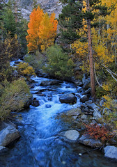 North Bishop Creek (Dave Toussaint (www.photographersnature.com)) Tags: california ca travel autumn red orange usa color green fall nature water yellow photoshop canon river landscape photo interestingness interesting october long exposure day photographer slow cs2 picture sierra clear explore adobe northern sierranevada eastern bishop easternsierras 2011 northcreek denoise 60d topazlabs aspendell photographersnaturecom davetoussaint ringexce
