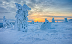 Sugar frosting (Thierry Hennet) Tags: blue winter sunset orange white snow tree zeiss landscape frozen finnland sony scenic lapland hdr cloudysky kslompolo photomatix a900 coldtemperature cz2470mmf28