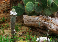 Cactus (Claudio.Ar) Tags: cactus naturaleza color nature argentina zoo buenosaires sony dsc h9 temaiken claudioar claudiomufarrege