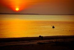 Fisherman II (Jessica Crosby) Tags: sunset beach ga georgia fisherman nikon jekyllisland sweep d60 justbe beginnerdigitalphotographychallengewinner georgiabeachesandseascapes justbephotography photographybyjessicacrosby eclecticallyeccentric jessicacrosby