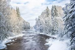 Pitkkoski conservation area, Helsinki (Paarma) Tags: winter snow ice water forest helsinki wideangle bluesky rapid slowshutterspeed 366 366project ginordicjan12 ginordicfeb12
