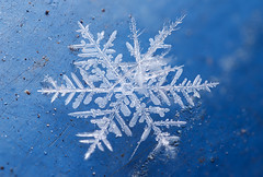 Snowflake (tomkpunkt) Tags: snowflake blue winter white macro ice star nikon blau makro stern eis weis schneeflocke d80 tomkpunkt