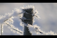 (Suipixel) Tags: cold canon thüringen frosty jena kalt eis landschaft sonntag morgens früh forst kristalle eiskristalle jägerberg canon400d sigmaobjektiv suipixel