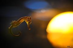 Ia pervane olmu Deniz At (fotografhikayelerim) Tags: denizat istanbulakvaryum