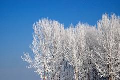 Il grande freddo (SmemorGiò) Tags: winter cold gelo frost italia piemonte po inverno freddo fiumepo carmagnola gerbasso