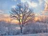 Color of winter. (Bessula) Tags: winter sunset sky snow tree texture nature sweden ngc motat coth bessula tatot bestcapturesaoi magicunicornverybest magicunicornmasterpiece rememberthatmomentlevel1 rememberthatmomentlevel2