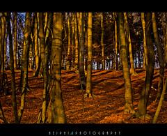 tree leaves (*HEIPHI*) Tags: brown black tree green nature landscape nikon forrest natur grn braun landschaft wald baum schwarz stamm d5100 heiphi
