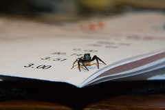 Macro Bill (Michael Whay) Tags: macro closeup marketing spider bill small bank tiny extremecloseup billing 300 account jumpingspider amount shallowdepthoffield araneae salticidae northamericanjumpingspider