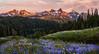 Paradise (posthumus_cake (www.pinnaclephotography.net)) Tags: sunset mountains nature zeiss landscape paradise meadow alpine rainier mountrainiernationalpark wa wildflowers pnw lupine ze distagon carlzeiss tatooshrange distagont235