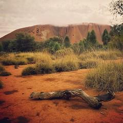 Uluru. (jnicht) Tags: square australia sierra squareformat outback uluru australien iphoneography instagramapp uploaded:by=instagram