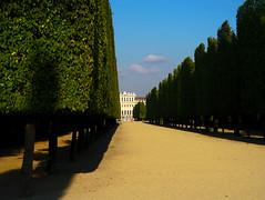 Alignment (jezselten) Tags: vienna park old trees light history gardens walking austria sand europe order tourist pathway