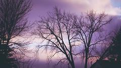 november 2014 (timp37) Tags: november trees fall illinois oak central lawn 2014