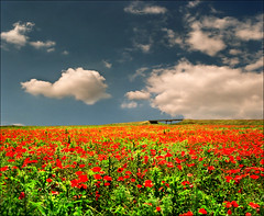 Red field (Katarina 2353) Tags: film landscape spring nikon europe serbia vojvodina srbija beska katarinastefanovic katarina2353