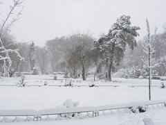 (cod_gabriel) Tags: winter snow romania bucharest bucuresti bukarest roumanie boekarest bucarest iarna zapada romnia bucureti ninsoare zpad iarn bazilescu bucareste parculbazilescu parcbazilescu