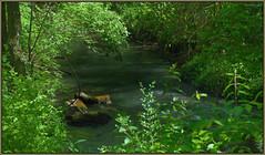 (Cliff Michaels) Tags: park trees photoshop landscape pond nikon rocks stream tennessee greenbelt maryville d5000 pe9