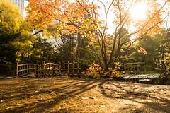Light & Shadow. (bgfotologue) Tags: morning school autumn light shadow japan campus landscape photography photo office sapporo hokkaido image momiji   government kouyou    maples   redleaves     2015    bgphoto  500px  tumblr    bellphoto